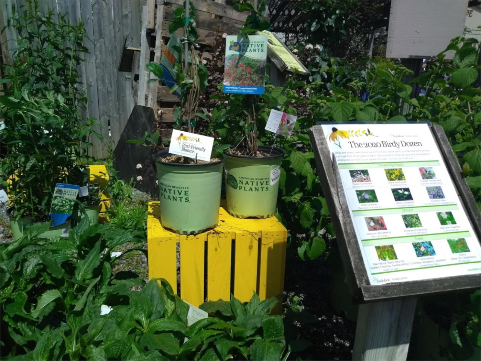 Bird-Friendly Blooms Display