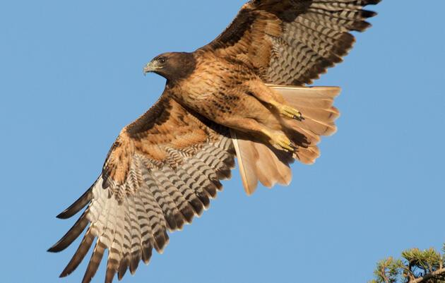 History of Pennsylvania Hawk Watching