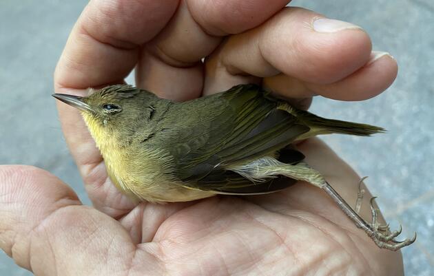 Monitoring Bird-window Collisions in Downtown Philadelphia