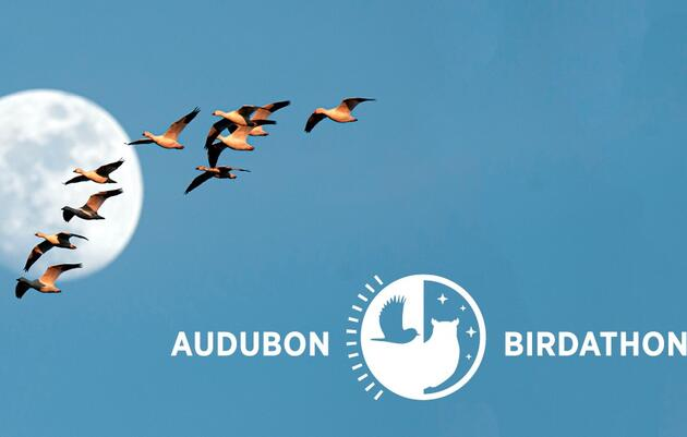 Join Us May 15 for Audubon Mid-Atlantic's Birdathon