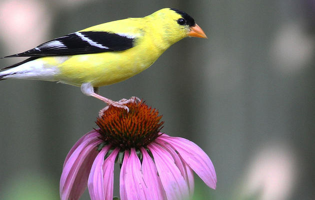Plant-Bird Database