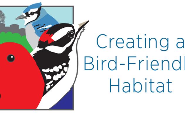 4 Tips for a Bird-Friendly Habitat