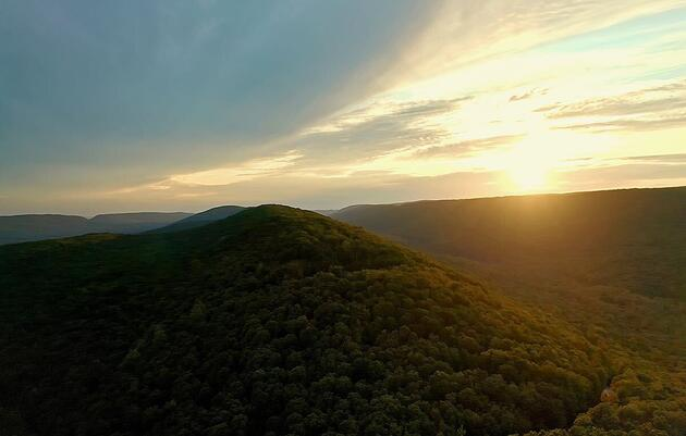 A Bird Migration Corridor like No Other, the Kittatinny Ridge Depends on a Healthy Forest