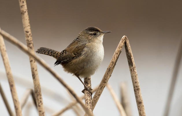 Birds | Audubon Pennsylvania