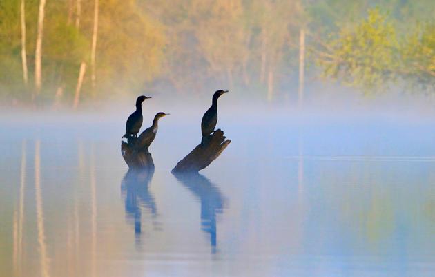 Pennsylvania Audubon Monthly Newsletters