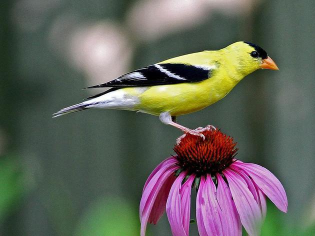 Audubon Newsletter: Summer 2018