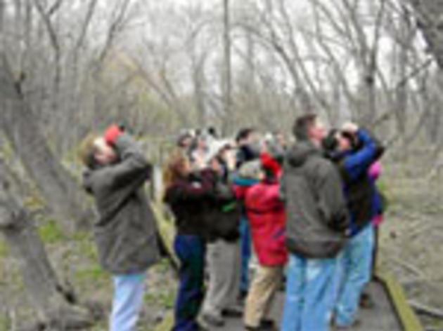 Birders Workshops