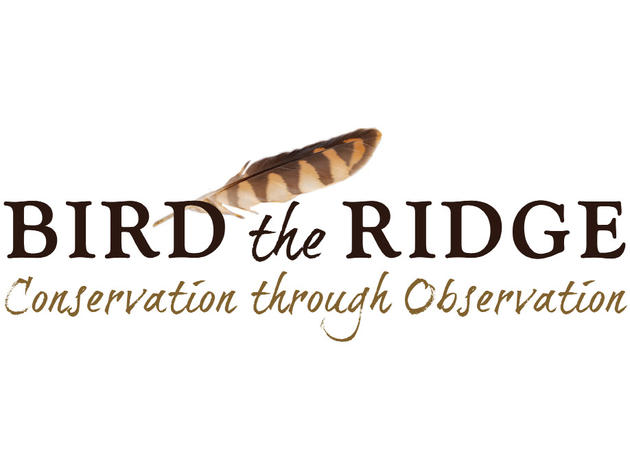Bird The Ridge