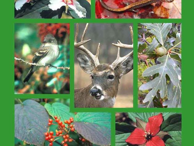 Managing White-tailed Deer in Forest Habitat From an Ecosystem Perspective