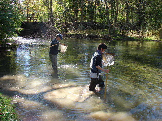 Central Pennsylvania Stream Studies -- Ecology in the Field!