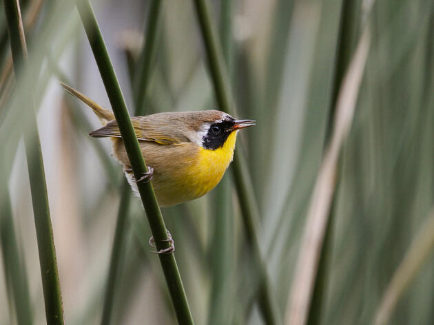 Bird Safe Philly Kicks Off Fall Migration With Seasonal Lights Out Philly Program