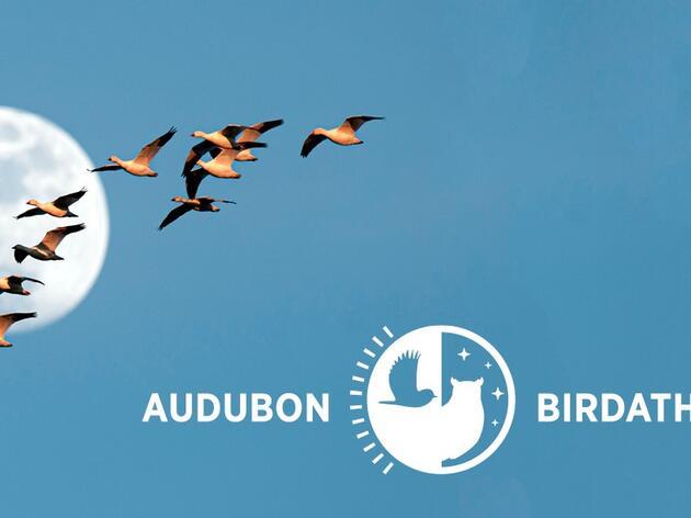Join Us May 15 for Audubon Mid-Atlantic's Birdathon