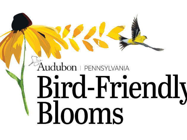 Bird-Friendly Blooms