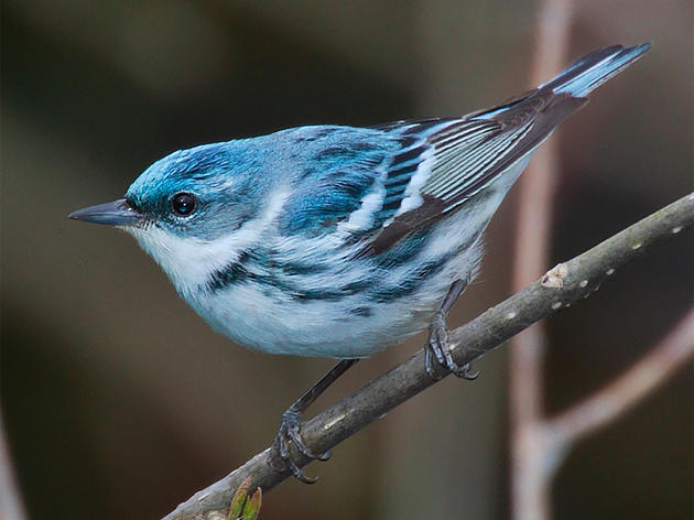 Audubon Pennsylvania Joins Riverfront Festival to Highlight Bird, Environmental Conservation