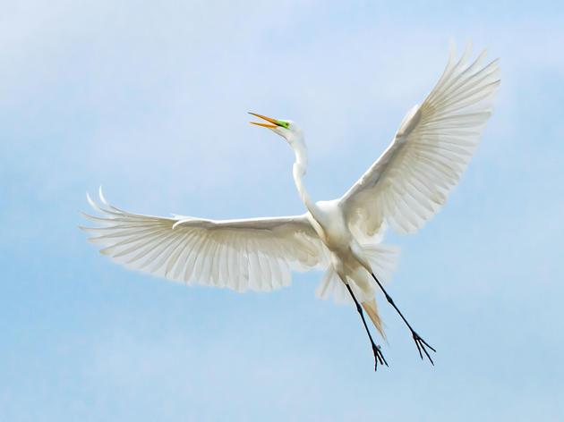 Audubon Lawsuit Seeks to Restore Protections for Migratory Birds