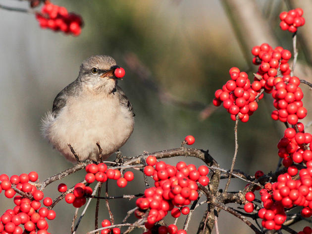 Plants for Birds in the Schuylkill Highlands