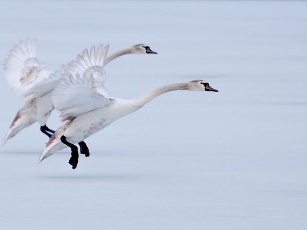 Audubon Pennsylvania Encourages Congress to Prevent Arctic Refuge Drilling
