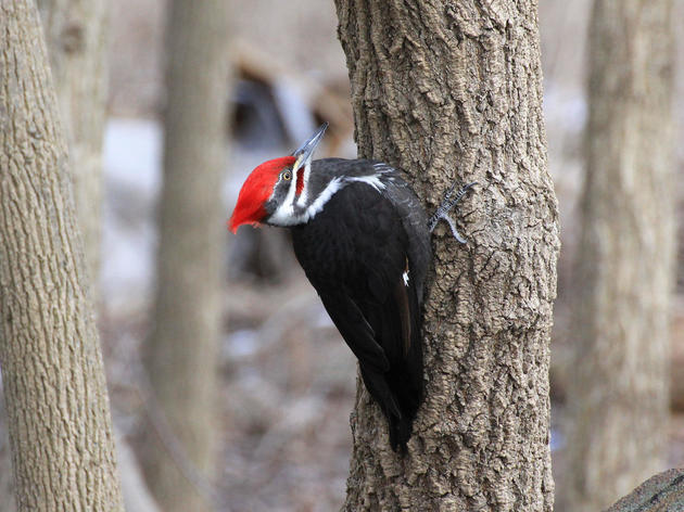 PA Counts: Audubon's Great Backyard Bird Count