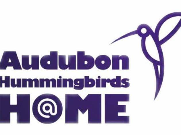 Hummingbirds at Home!