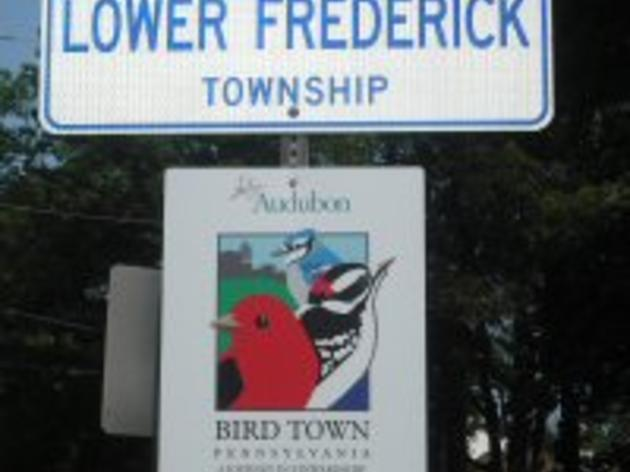 How Does My Municipality Become a Bird Town?