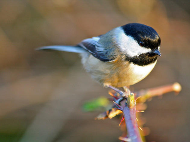 Birds Come Out On Top during Omnibus Spending Negotiations