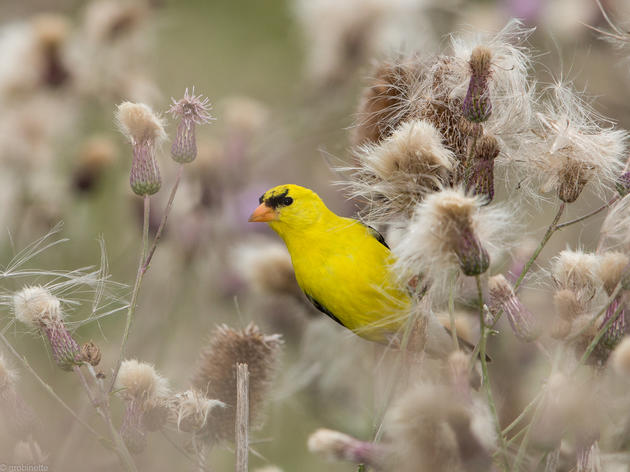 Audubon Works in Central Pennsylvania