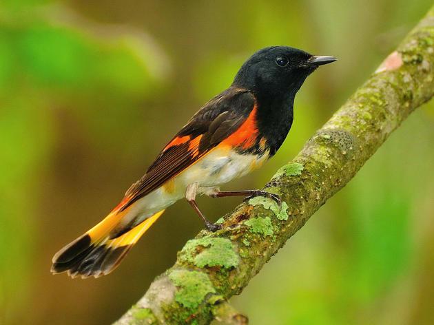 Audubon Pennsylvania Welcomes GOP Climate Resolution