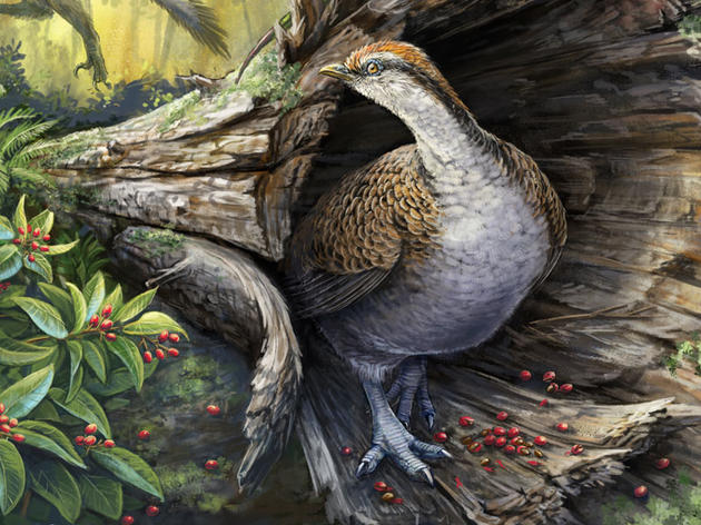 How Did the Ancestors of Birds Survive the Apocalypse?