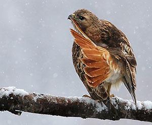 Great Backyard Bird Count 2018   Audubon Pennsylvania