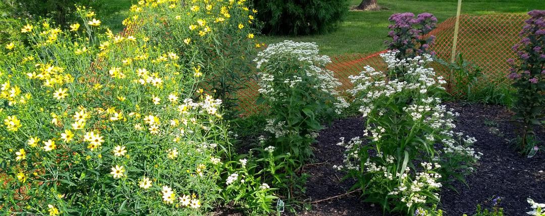 Pollinator Garden at Kiwanis Lake